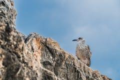 Pássaro nas rochas fotografia de stock