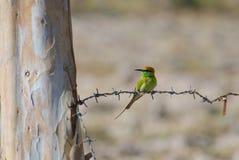 Pássaro no arame farpado Imagem de Stock Royalty Free