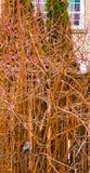 Pássaro no arbusto Foto de Stock Royalty Free