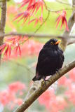 Pássaro no arbusto imagem de stock
