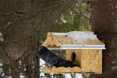 Pássaro no aviário Foto de Stock