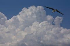 Pássaro no céu azul Foto de Stock Royalty Free