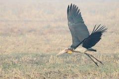 Pássaro no campo Imagem de Stock Royalty Free