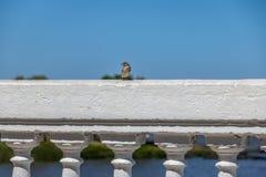 Pássaro no del Sacramento do La Plata River - do Colonia, Uruguai Imagem de Stock