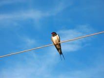 Pássaro no fio imagem de stock royalty free