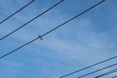 Pássaro no fio só Imagem de Stock Royalty Free