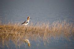 Pássaro no lago fotos de stock royalty free