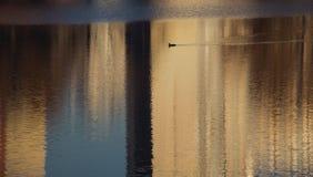 Pássaro no lago nas reflexões das construções fotografia de stock royalty free