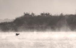 Pássaro no lago nevoento Imagens de Stock Royalty Free