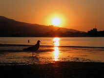Pássaro no nascer do sol do por do sol da praia fotos de stock royalty free