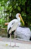 pássaro no parque do pássaro Imagem de Stock