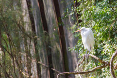 Pássaro no ramo Fotografia de Stock Royalty Free
