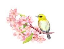 Pássaro no ramo da flor com flores watercolor ilustração royalty free