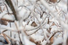 Pássaro no ramo de árvore gelado Fotos de Stock Royalty Free