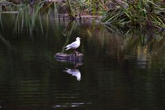 Pássaro no registro Fotografia de Stock