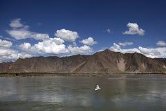 Pássaro no rio de Lhasa Imagens de Stock Royalty Free