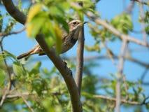 Pássaro no selvagem Fotografia de Stock Royalty Free