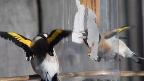 Pássaro no selvagem video estoque