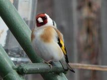 Pássaro no selvagem Imagens de Stock