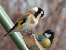 Pássaro no selvagem Fotografia de Stock