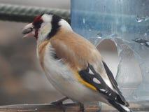 Pássaro no selvagem Fotos de Stock