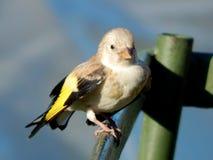 Pássaro no selvagem Imagem de Stock