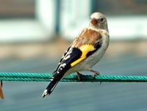 Pássaro no selvagem Foto de Stock Royalty Free