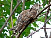 Pássaro no selvagem Foto de Stock