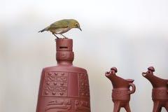 Pássaro no utensílio do vinho imagens de stock royalty free