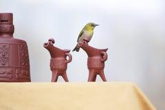 Pássaro no utensílio do vinho fotos de stock
