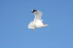 Pássaro no vôo imagens de stock
