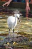 Pássaro observador do guindaste Imagem de Stock Royalty Free