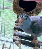 Pássaro parvo da tartaruga da cabana do coco fotografia de stock