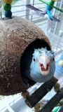 Pássaro parvo da tartaruga do coco imagens de stock royalty free