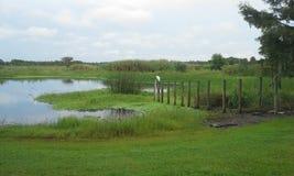 Pássaro pelo lago imagens de stock royalty free