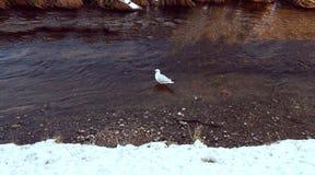 Pássaro pelo lago no inverno foto de stock royalty free