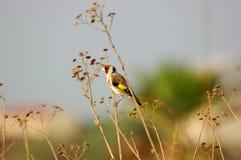 Pássaro pequeno imagens de stock