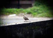 Pássaro pequeno Fotos de Stock Royalty Free
