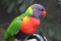 Pássaro pequeno bonito pequeno Imagens de Stock