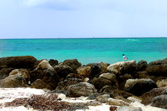 Pássaro pequeno e o oceano Imagem de Stock Royalty Free