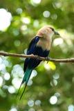 Pássaro pequeno em uma filial fina Fotos de Stock Royalty Free