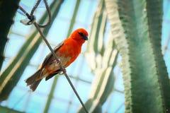 Pássaro pequeno empoleirado em um fio Fotografia de Stock Royalty Free
