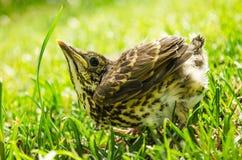 Pássaro pequeno na grama Fotografia de Stock Royalty Free