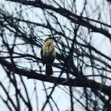 Pássaro pequeno poderoso fotografia de stock