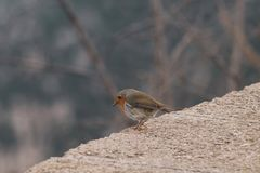 Pássaro pequeno que olha abaixo da floresta fotos de stock