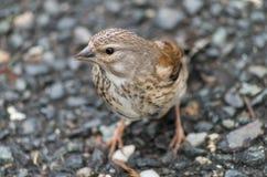 Pássaro perdido Imagem de Stock Royalty Free