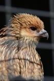 Pássaro prendido Imagens de Stock