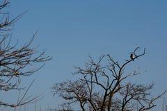 Pássaro quarenta Fotos de Stock Royalty Free
