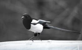 Pássaro quarenta em um parque na natureza fotografia de stock royalty free