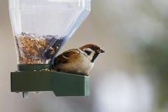Pássaro que alimenta no inverno imagens de stock royalty free
